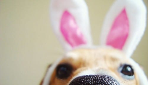 2nd Annual Doggie Easter Egg Hunt!