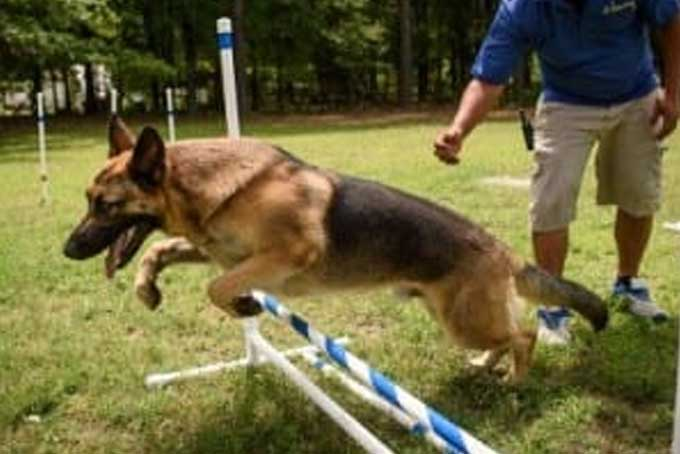 dog-training-img